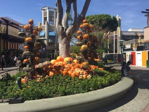 Pumpkins! Pumpkins everywhere!